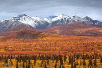 Muskeg: Tundra And Taiga