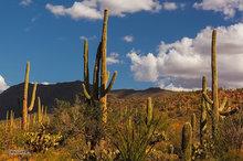 Little Rincon Mountains,saguago cactus,clouds,afternoon light,desert