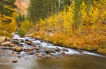 Bishop Creek Beauty