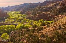 Boynton Lookout,Utah,Escalante River,sunrise,deserts,scenic route,green,textures