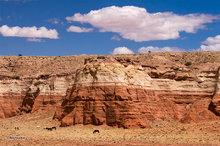 Comb Ridge,horses,clouds,sandstone wall,striated