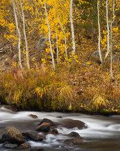 Creekside Gold