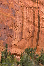 Burr Trail,Utah,Long Canyon,varnish,deserts,scenic route,red,trees