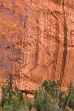 Burr Trail,Utah,Long Canyon,varnish,deserts,scenic route,red,trees