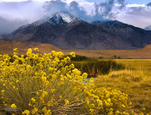 Mount Tom,Owens Valley,morning,Sierra mountains,rabbit brush,clouds