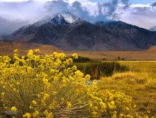 Mount Tom,Owens Valley,morning,Sierra mountains,rabbit brush,clouds