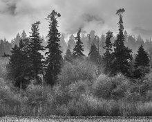 Edmonds marsh,fog,estuary