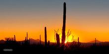 Saguaro NP,Equinox,sunset