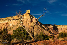 New Mexico,Ghost Ranch,Chimney Rock,forked snag