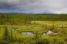 Fox Creek,below Fox Lake,Klondike Hiway,Yukon,Canada