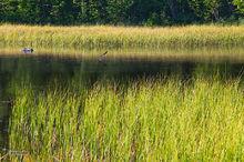 Hidden Creek,Hidden Lake,Skilak Wildlife Recreation Area,Kenai Wildlife Refuge,Kenai Peninsula,Alaska