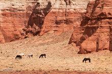 horses,wall,clouds,Comb Ridge,striated