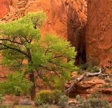 Burr Trail,Utah,slot canyon,Long Canyon,green,red,tree,textures,scenic route