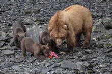 Feeding Feenzy