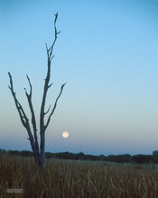 Botswana,Africa,Okavango delta,moon,blue