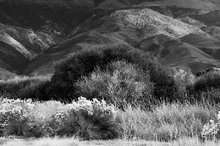 Owens Valley,morning,rabbit brush