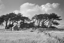 Krummholz Trees & Clouds