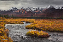 taiga,Stickwan Creek,Old Denali Hiway,Alaska