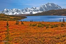 Fall Color, Wonder Lake