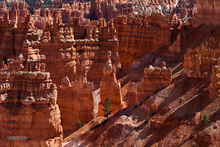 Bryce Canyon NP, Sunset Point, Thor's Hammer
