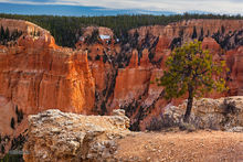 Bryce Canyon NP, Paria View Point, Limber Pine