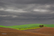 Palouse, green, plowed