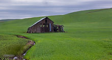 Palouse, green, derelict barn