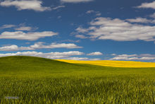 Palouse, Wheat, Canola