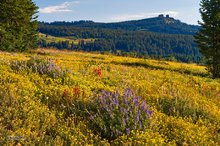 Steamboat Springs,Rabbit Ears Pass,wildflowers