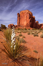 Monument Valley,Yucca,Rain God Mesa,clouds