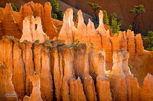 Bryce Canyon,Sunset Point,hoodoo,Bryce Amphitheater,trees