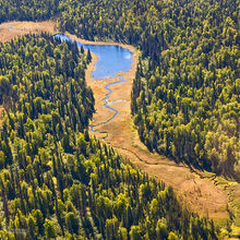 taiga,boreal forest,river,meander,aerial view,Denali NP,Alaska