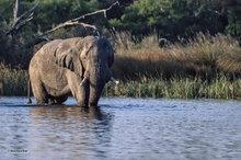 Botswana,Africa,elephant