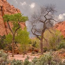 Burr Trail,Utah,Long Canyon,trees,green,red