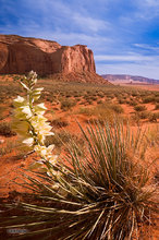 Monument Valley,Thunderbird Mesa,Yucca,clouds