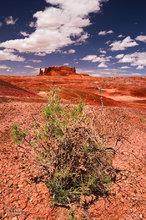 Round Rock,mesquite,desert,clouds