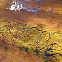 Tundra Meanders