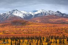 Taiga,tundra,Chugach Mountains,Glenn Hiway,Alaska