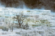 travertine,Mammoth Hot Springs,White Elephant Terrace; Yellowstone NP; limestone