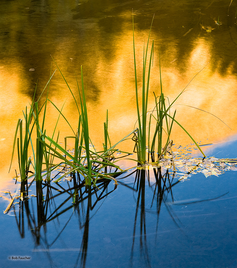 River grasses mark the border of the reflection between the aspen-covered hillsides and sky in a calm stretch of the Bishop Creek...