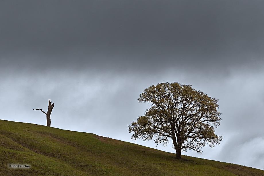 Bear Valley,Lake County,CA,oak tree,clouds, photo