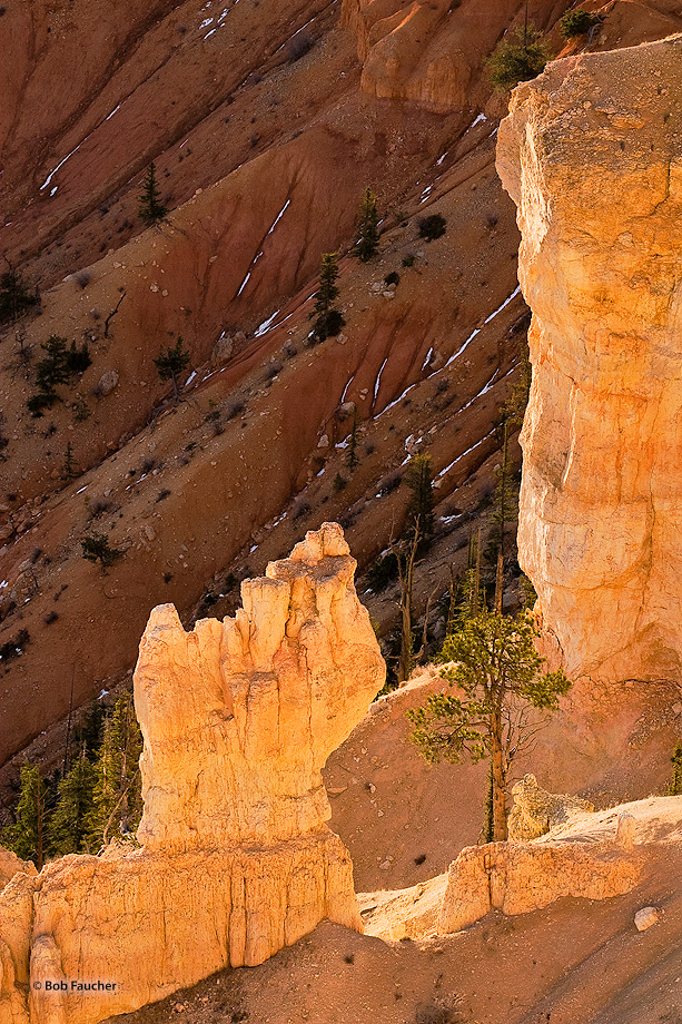 A lone tree grows between two hoodoos among the sandy ridges forming the walls of Bryce Canyon