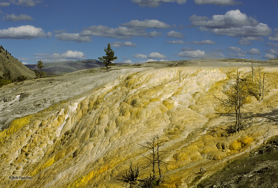 Canary Spring,Yellowstone NP,thermal feature; limestone, photo