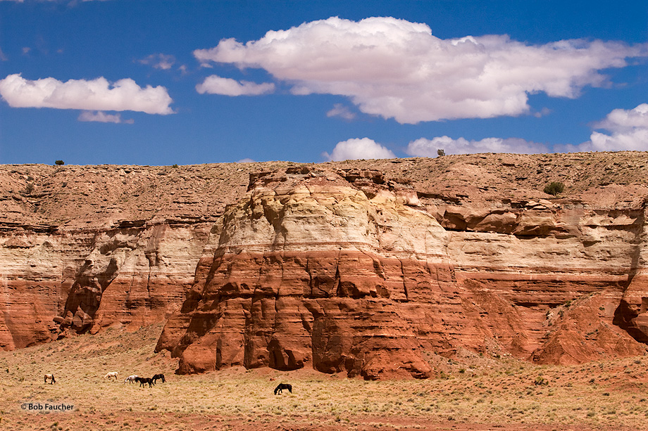 Comb Ridge,horses,clouds,sandstone wall,striated, photo