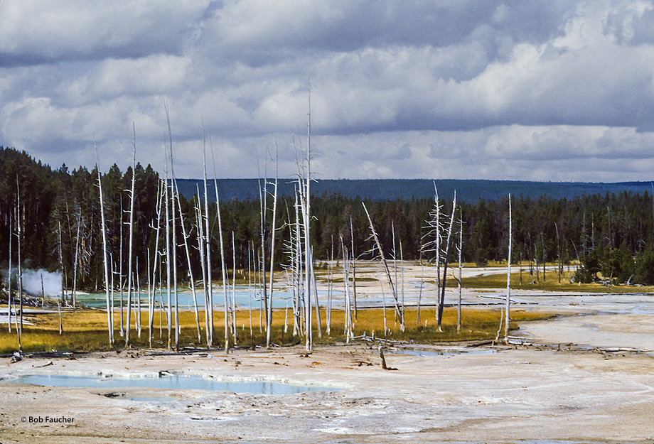 The name of this thermal feature in Norris Geyser Basin was proposed because of popping sounds from nearby springs on its southern...