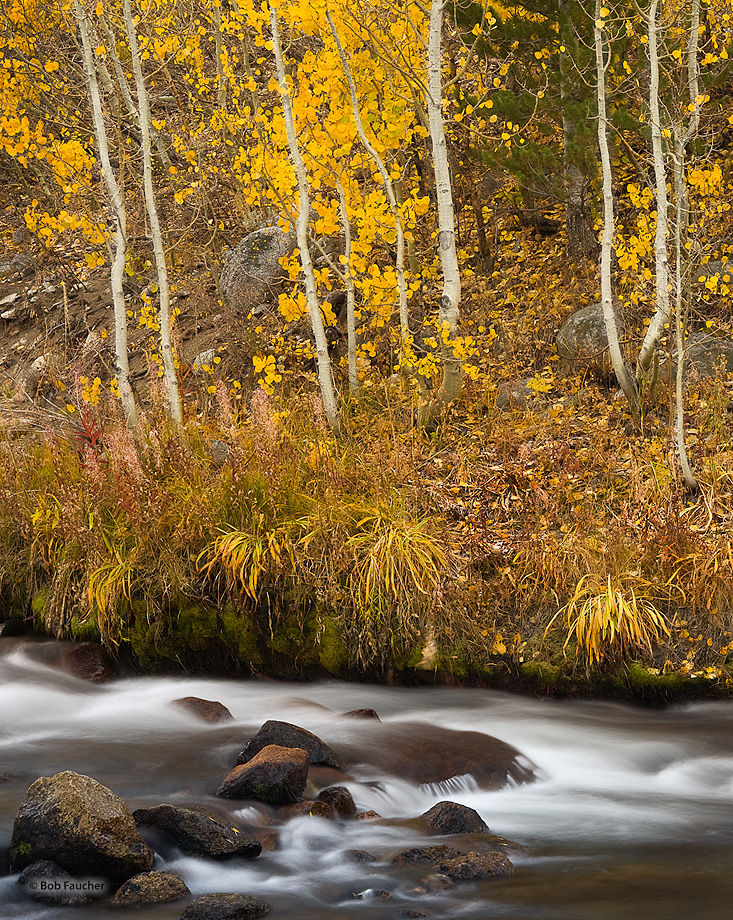 Fall color along the South Fork, Bishop Creek