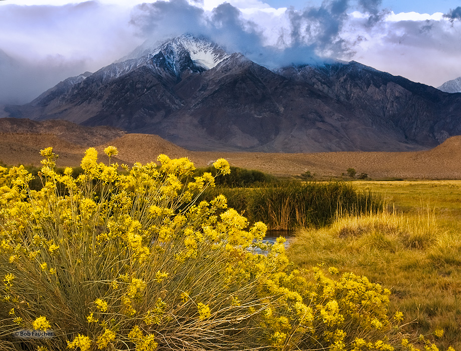 Mount Tom,Owens Valley,morning,Sierra mountains,rabbit brush,clouds, photo