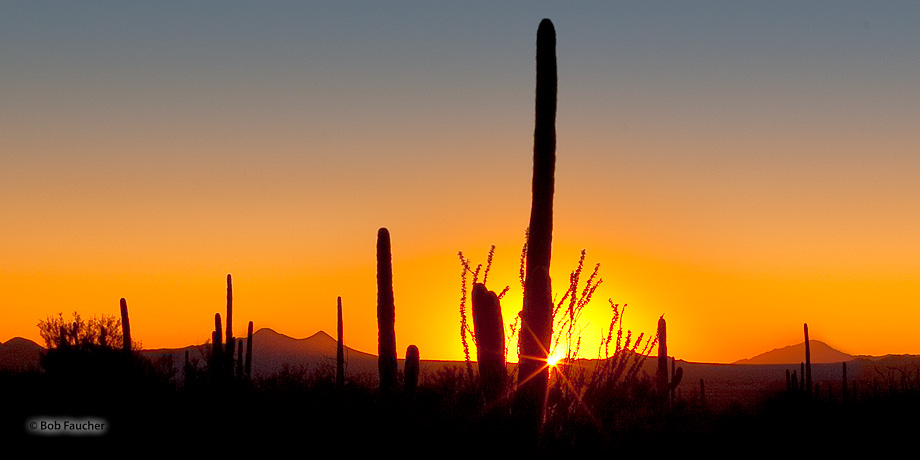 Saguaro NP,Equinox,sunset, photo