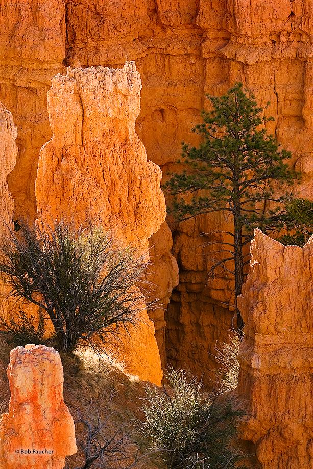 Bryce Canyon,Utah,Fairyland,sunrise,hoodoo, photo