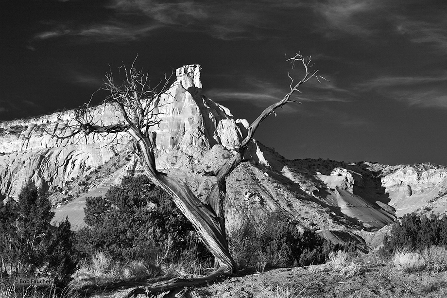 New Mexico,Ghost Ranch,Chimney Rock,forked snag, photo